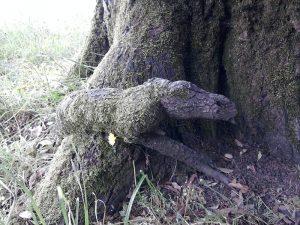 albero con cane