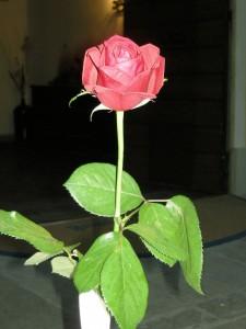 4 rosa