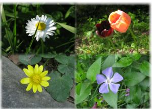 1 collage per Blog