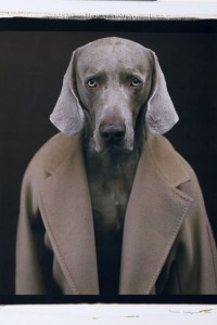 15 william-wegman-2001-max-mara-mantel-101801_article_gallery_portrait