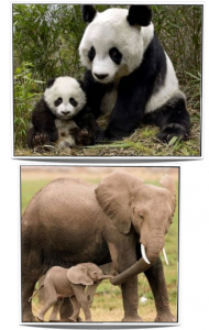 3 collage animali 2