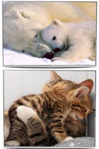4 collage animali